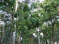 Ho-Ĉi-Min-urbo 2012-08-05 39.jpg