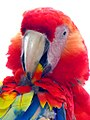 Honduras-0140 - Macaw at Copan (2213587821) (2).jpg
