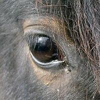 HorseEye c