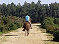 Horse and rider approaching King's Copse Inclosure, New Forest - geograph.org.uk - 515278.jpg