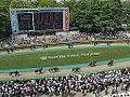 Horse racing @ Tokyo Race Course @ Fuchu (14121253434).jpg