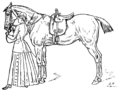 Horsemanship for Women 047.png
