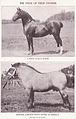 Horses Btwn 1374 and 1375.jpg