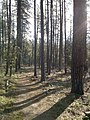 Horton Creek Trail, Payson, Arizona - panoramio (16).jpg