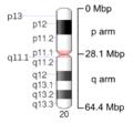 Human chromosome 20 - 550 bphs.png