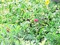 Hummingbird (1620654549834e12bc8a599c3de2b7f7).JPG