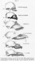 Huxley Evidenz Fig017.png