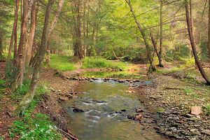 Hyner Run State Park - Hyner Run within the park.
