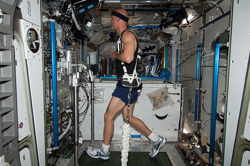 File:ISS-36 Luca Parmitano exercises on COLBERT.jpg