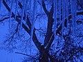 Icicles, before sunrise - panoramio.jpg