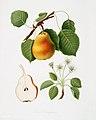 Illustration from Pomona Italiana Giorgio Gallesio by rawpixel00029.jpg