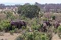 Impressions of Serengeti (129).jpg