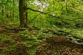 Innerer Unterspreewald 12.jpg