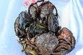 Iz - Eriocheir sinensis - 1.jpg