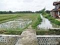 Jalan Tengah Sawah (Siwolo) - Winong - panoramio.jpg
