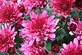 James Gardens (2968146640).jpg