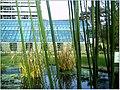 January Frost Botanic Garden Freiburg Bamboo - Master Botany Photography 2014 - series Germany Saphir pictures - panoramio.jpg