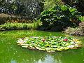 Jardin aquatique.JPG