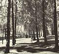 Jyväskylän Rantapuiston Kulttuuri Miljöö.jpg