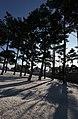 KOCIS Korea Snowfall in Gyeongbokgung 04 (11318921943).jpg