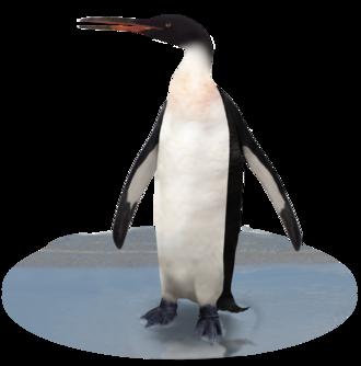 Pinguino gigante Ricostruzione di K. grebneffi