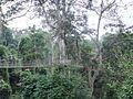 Kakum National Park 2.JPG