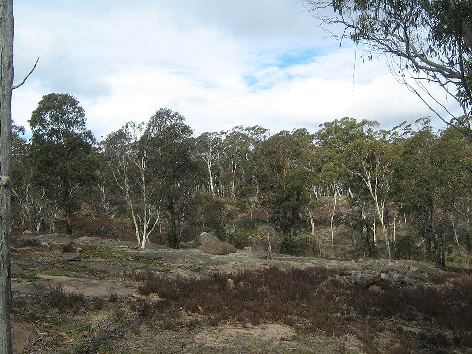 Kanangra-Boyd National Park near Boyd River