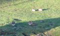 Kaninchen Familie Verhalten 3.png