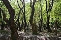 Karst-Springs Aroanios Achaea Peloponnese Greece.jpg