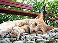 Katze in beaufort-en-argonne.JPG