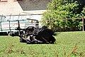 Katzensee - Gut Katzensee 2010-08-01 15-54-40.JPG
