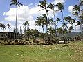 Kauai-Heiau-Hikinaakala-far.JPG