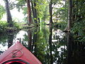 Kayaking in Spreewald 2012 (6).jpg