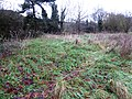 Kirby Frith Nature Reserve 2.jpg