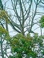 Kirstenbosch National Botanical Garden, Cape Town (P1060079).jpg