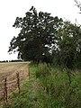 Kissmedown Lane - geograph.org.uk - 540988.jpg