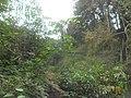 Kmerski krajobraz.jpg