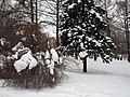 Kolomenskoye in winter 08.jpg