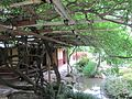 Koshin-an wisteria.jpg