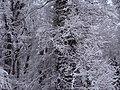 Krasnaya polyana - panoramio (5).jpg