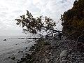 Kreideküste auf Rügen 03.JPG