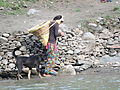 Kullu Girl going along river Beas near Kullu , Himachal Pardes, India.JPG