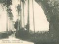 L'allée du Manoir avant le cyclone de 1928.png