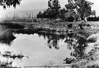La Brea Tar Pits - The Tar Pits in 1910; oil derricks can be seen in the background