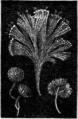 La Nature - 1879 - S1 - p376- Origines de la vie-Fig.3.png
