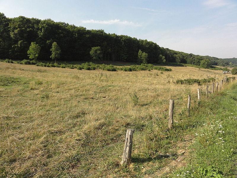 Laneuveville-derrière-Foug (Meurthe-et-M.) Bois de Pagney