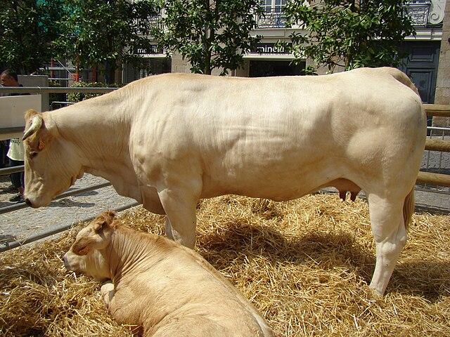 File la ferme en ville blonde d 39 aquitaine jpg for Camping a la ferme auvergne piscine