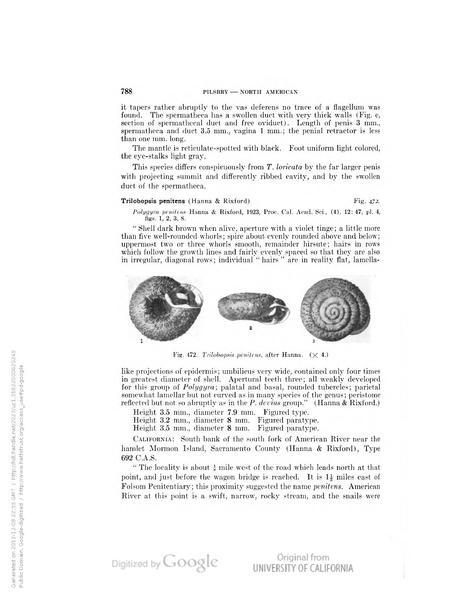 File:Land Mollusca of North America (north of Mexico) Vol. I Part 2 (2nd half).pdf