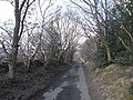 Lane from Healey to Dipton Foot - geograph.org.uk - 1193510.jpg