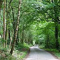 Lane through the Forest, Shirlett, Shropshire - geograph.org.uk - 457315.jpg